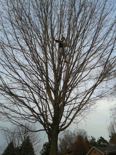 Ryan climbing trees like it's his day job