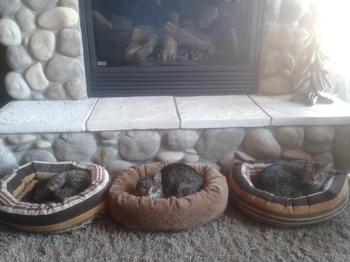 Three of four resident cats